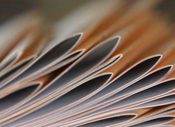 Elaborarea proiectelor de acte legislative şi normative. Aplicarea sancţiunii pentru abaterea disciplinară a salariatului
