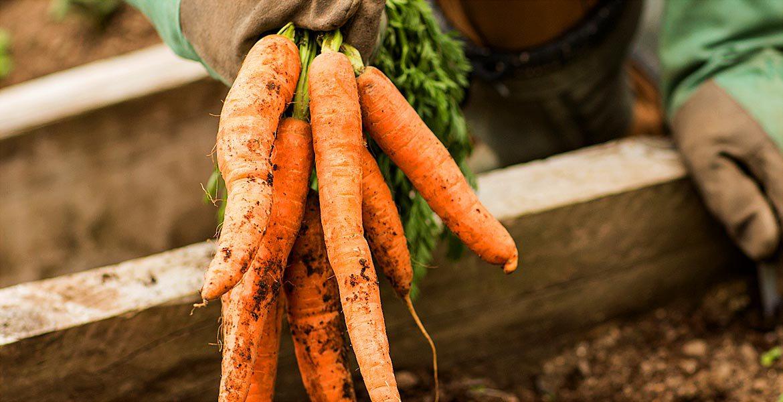Sfaturi naturiste. Consumă un morcov pe zi și te bucuri de 5 beneficii nebănuite!