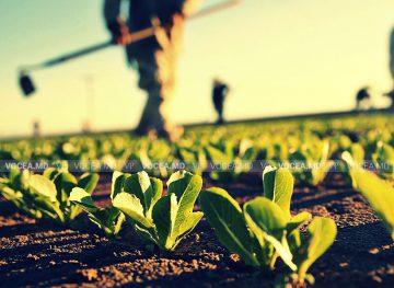 Zilierii care muncesc în agricultură ar putea fi remunerați cu vouchere