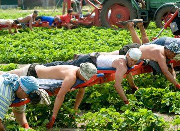 Нелегальная работа за границей: чем рискуют люди?