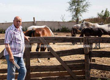 """Crescătoria de cai """"At-Polin"""" în obiectivul fotografului Nicu Bânzari"""