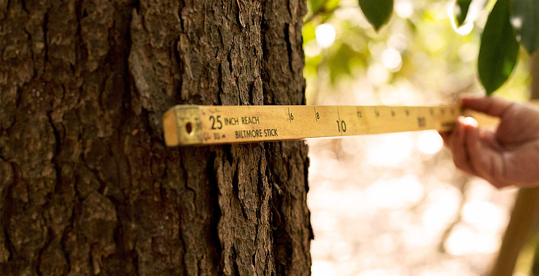 Профсоюзы лесного хозяйства могут выйти на протесты