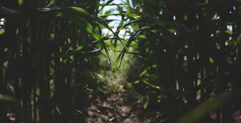 Preocupările sindicaliştilor din agricultură şi industria agroalimentară