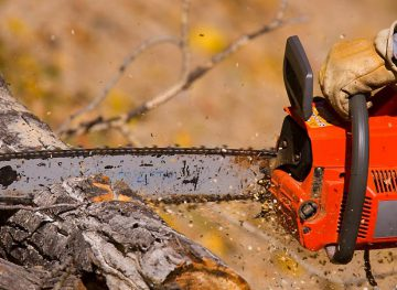 Лесоводам рассказали, как предупреждать несчастные случаи на работе