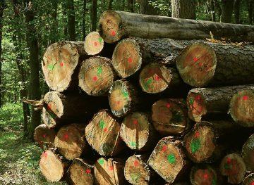 Работникам лесного хозяйства могут повысить зарплату