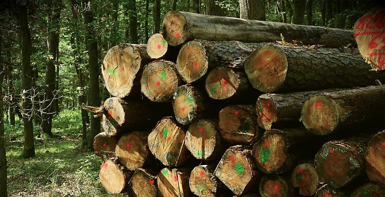 Angajaţii din silvicultură ar putea primi lefuri mai mari