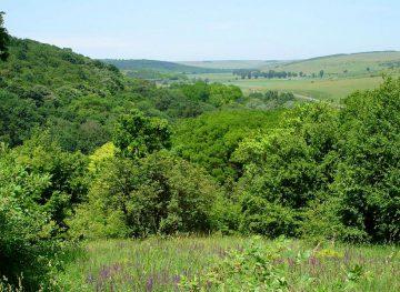 Suprafețele mai mari de păduri constituie o garanție pentru o populație mai sănătoasă