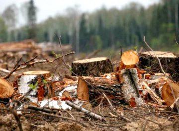 În 2019, au fost multe tăieri ilicite de păduri, iar situația nu s-a schimbat între timp