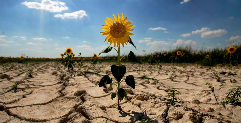 Засуха нанесла ущерб сельскому хозяйству по всей стране