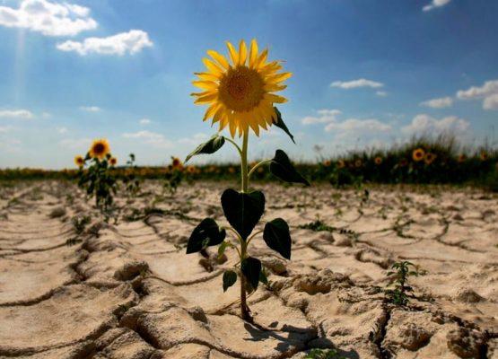 Seceta pune pe butuci agricultura de la un capăt la altul al țării
