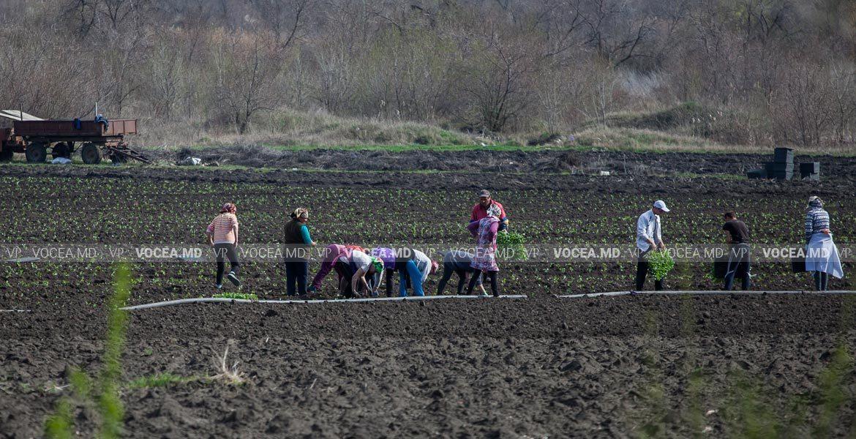 Выплата субсидий с опозданием добавляет сельскохозяйственным производителям хлопот