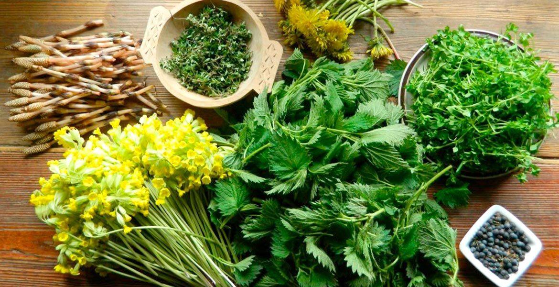 Дары природы. Весенняя зелень и ее польза для здоровья