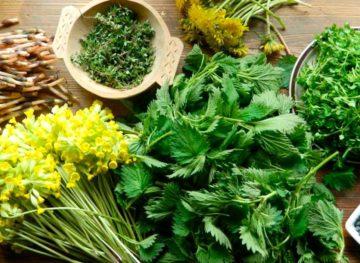 Sfaturi naturiste. Plantele de primăvară și beneficiile lor pentru sănătatea noastră