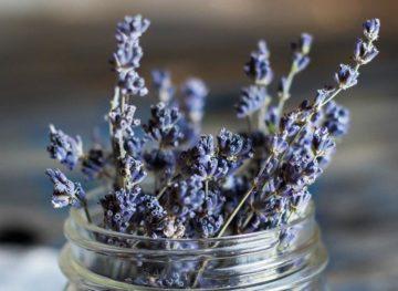 Sfaturi naturiste. Plante de casă care sunt foarte benefice pentru sănătatea noastră